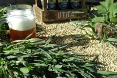 Logran completar el ciclo productivo de la cerveza Artesanal